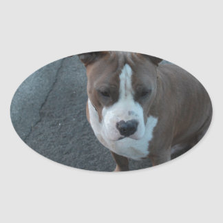 White and Grey Pitbull on concrete Oval Sticker