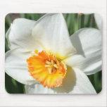White and Orange Daffodil Mousepad