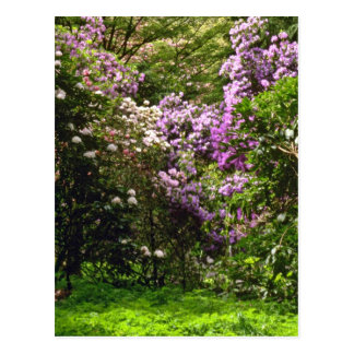 White And Pink Flowering Shrubs flowers Post Card