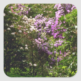 White And Pink Flowering Shrubs flowers Stickers