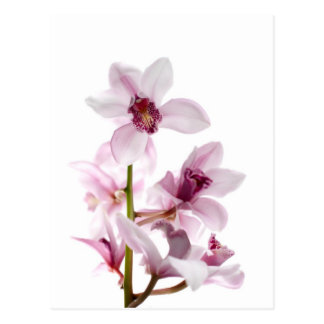 White and pink orchids post cards