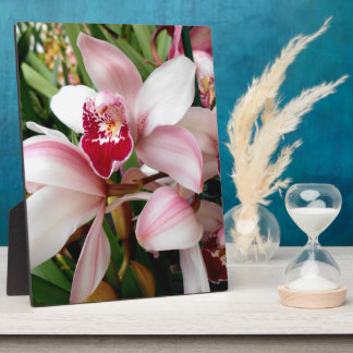 White and Pink Phalaenopsis Orchid Display Plaques