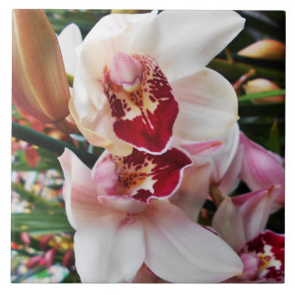 White and Pink Phalaenopsis Orchid Tile