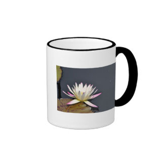 White and pink water lily. ringer coffee mug