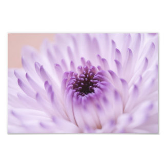 White and Purple Flower Photo Print