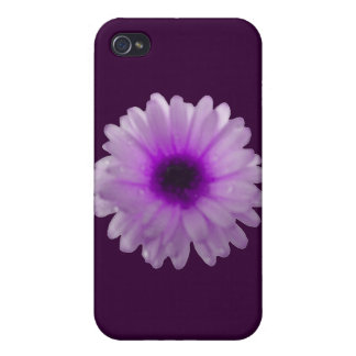 White and Purple Marigold  iPhone 4 Cover
