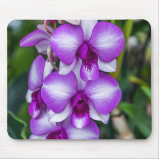 White and purple orchids mousepad