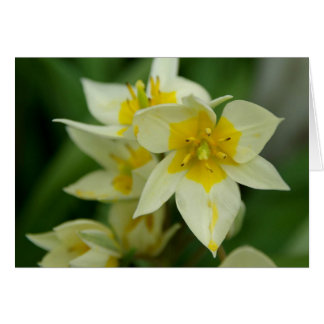 White and Yellow Flower Notecard Note Card