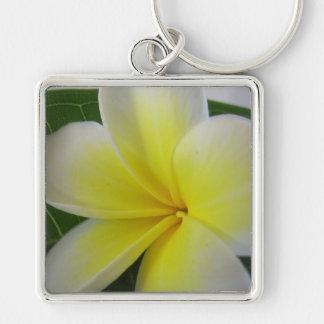 White And Yellow Frangipani Flower Key Chain