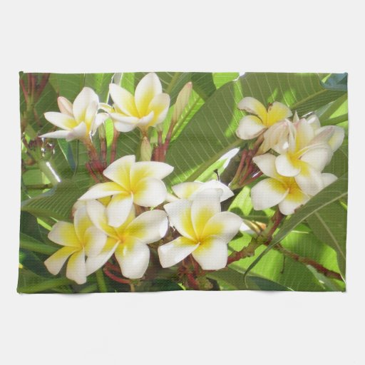 White and Yellow Frangipani Flowers with Leaves in Hand Towels