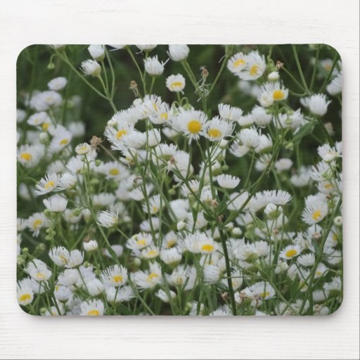 White and Yellow Mini little Daisy Aster flowers Mousepad