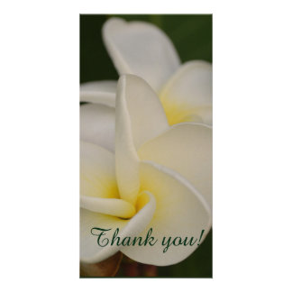 White and Yellow Plumeria Card