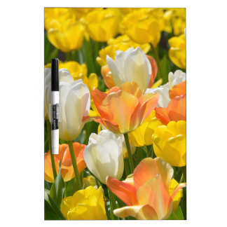 White and yellow tulips Dry-Erase whiteboards
