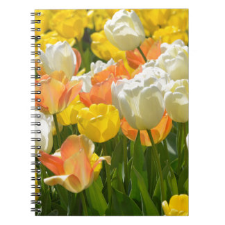 White and yellow tulips notebook