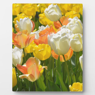White and yellow tulips plaque