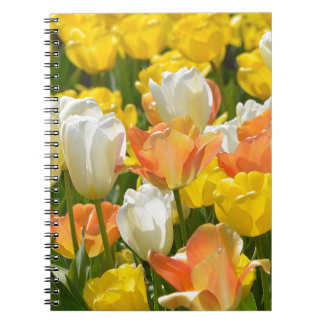 White and yellow tulips spiral note books