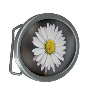 White and Yellow Wild Daisy Belt Buckles