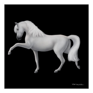 White Andalusian Horse Print