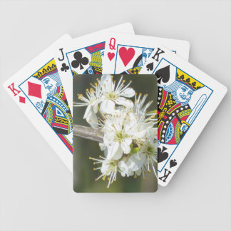 White Apple Blossom Flowers Bicycle Playing Cards