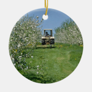 white Apple orchard cultivating, Nova Scotia flowe Christmas Ornament