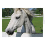 White Arabian Horse Greeting Card