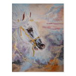 White Arabian Horse Postcard