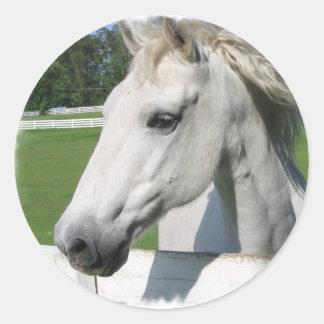 White Arabian Horse Sticker