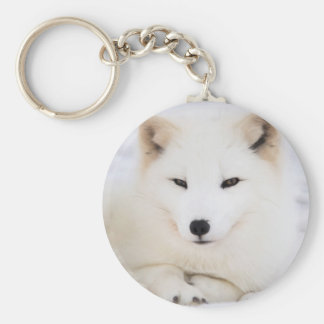 White arctic fox in snow key ring