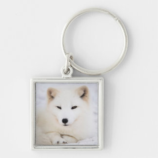 White arctic fox in snow Silver-Colored square key ring