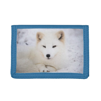 White arctic fox in snow trifold wallet