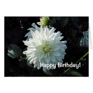 White Aster Birthday Greetings Card