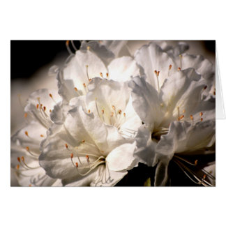 White azalea bridal shower invitation greeting card