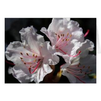 White azalea card