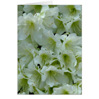 White Azalea Patch Flower Card