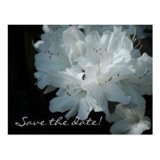 White Azaleas Save the Date Postcard