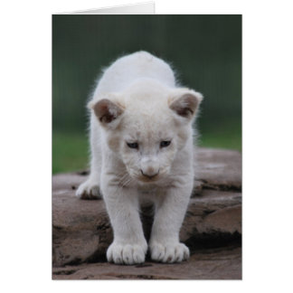 White baby lion cub greeting card