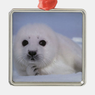 white baby seal Silver-Colored square decoration