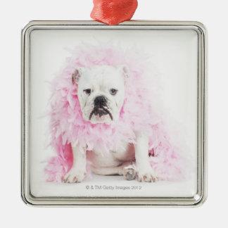 white background, white bulldog, pink feather christmas ornament