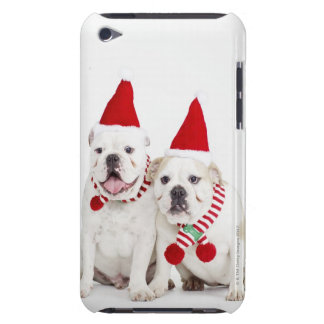 white background, white bulldogs, male dog, barely there iPod case