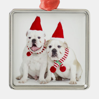 white background, white bulldogs, male dog, christmas ornament