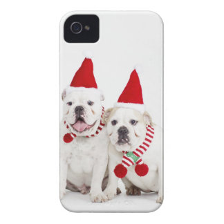 white background, white bulldogs, male dog, iPhone 4 covers