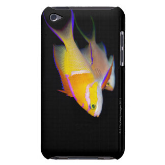 White Bar Anthias Barely There iPod Cover