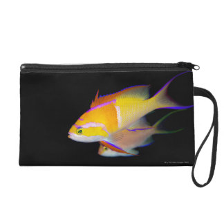 White Bar Anthias Wristlet