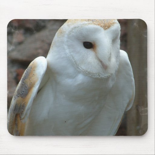 White Barn Owl  Mouse Pad