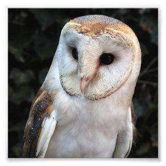 White Barn Owl Photo Print