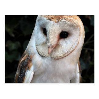 White Barn Owl Post Cards