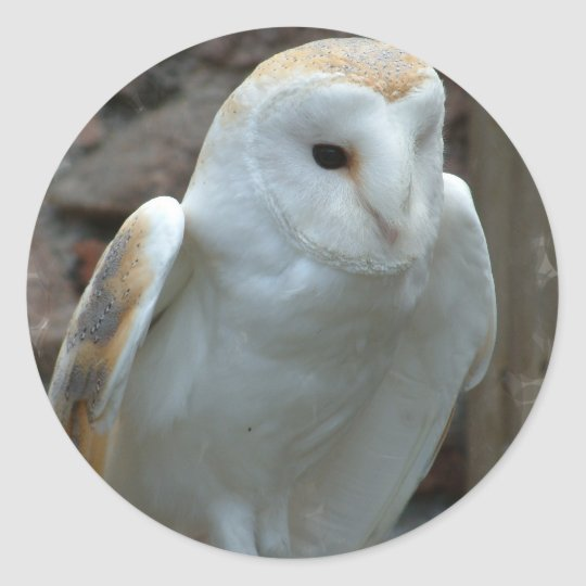 White Barn Owl  Stickers
