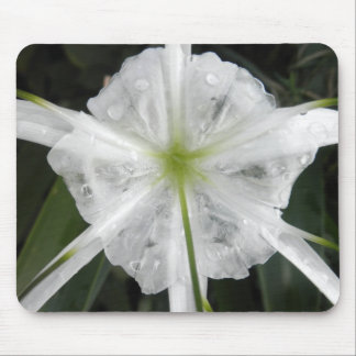 White Beach Spider Lily Lilies Flower Photo Mouse Pad