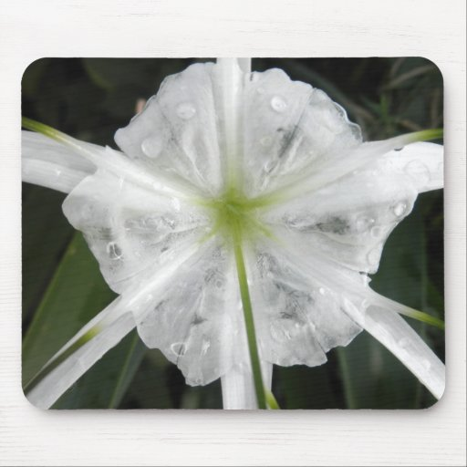 White Beach Spider Lily Lilies Flower Photo Mousepads