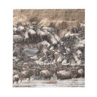 White-bearded Wildebeest or Gnu, Connochaetes Notepad